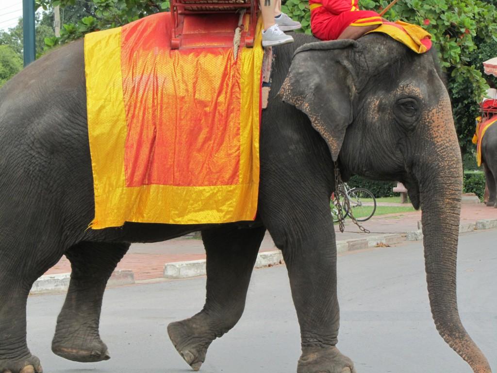 Elephant_1