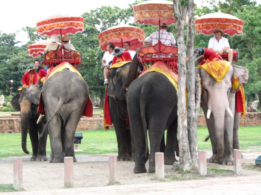 Elephant_7
