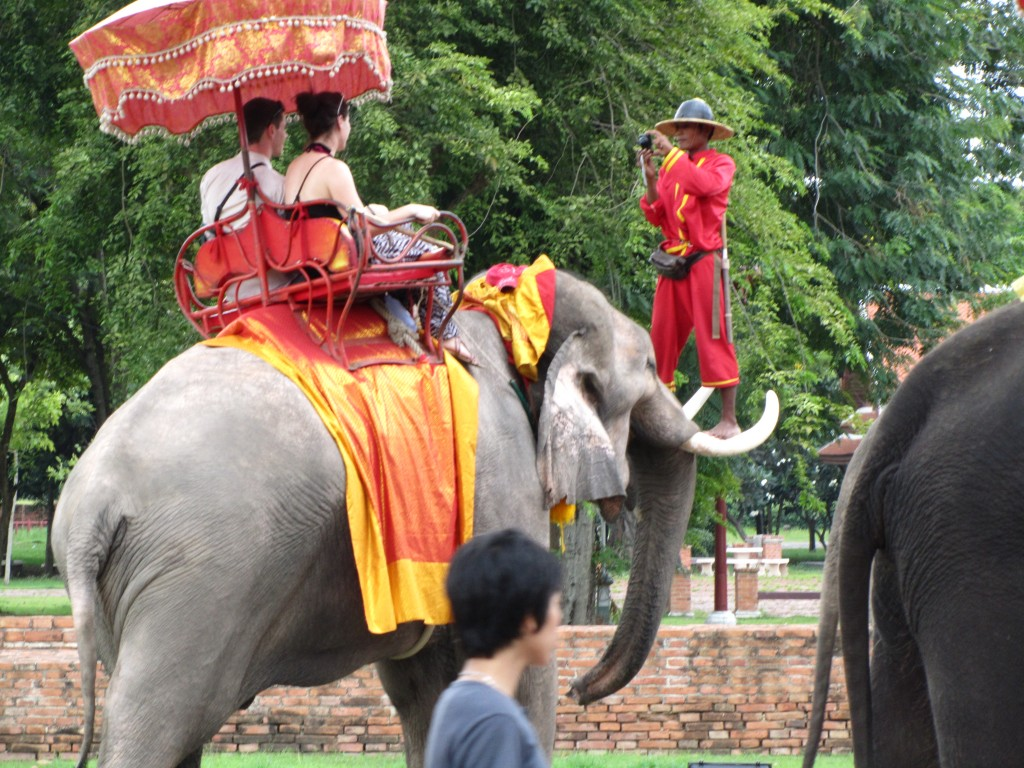 Elephant_8