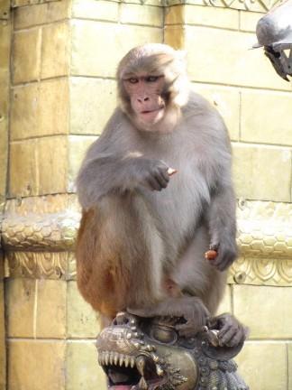 Swayambhunath_6